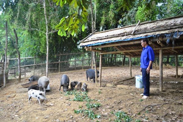 Đào tạo nghề chăn nuôi